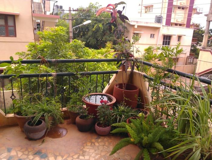in der Ecke ist die Terrassenbepflanzung am dichten, keramische Blumentöpfe