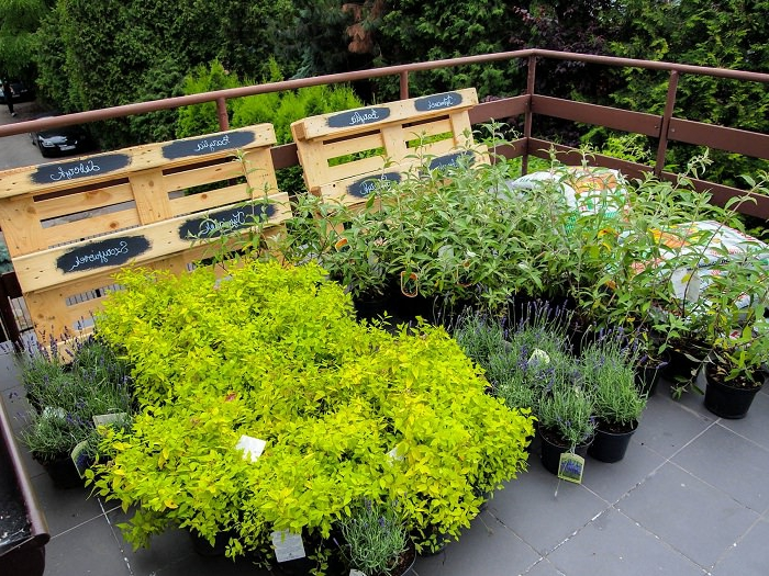 grüne Pflanzen in schwarzen Blumentöpfen, graue Fliesen, Europalette