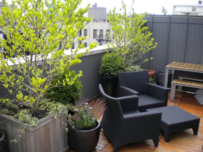 zwei Bäume mit gelben Blätter, zwei graue Rattan Sessel und ein kleiner Tisch, sonst Blumenkürbel bepflanzen
