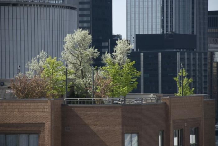 eine Menge Bäume auf einer Terrasse als Sichtschutz, Terrasse bepflanzen