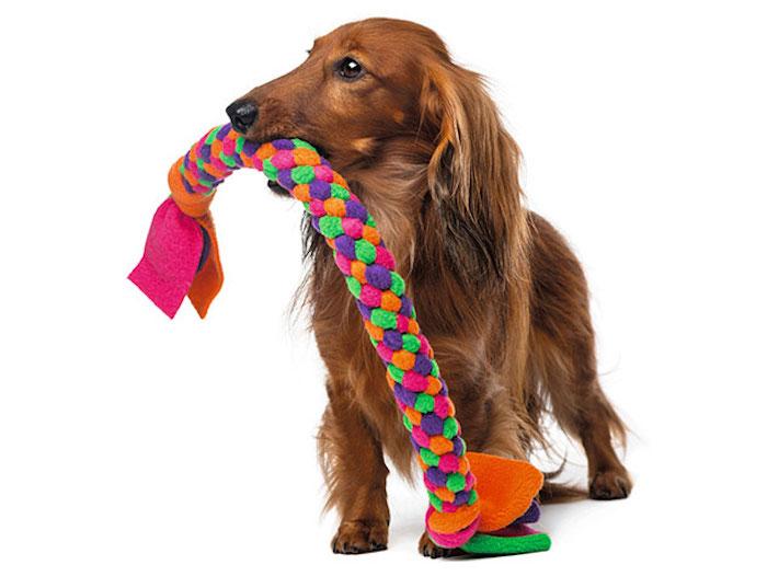 hund mit leine spielzeug, dackel mit großem buntem kauspielzeug, diy