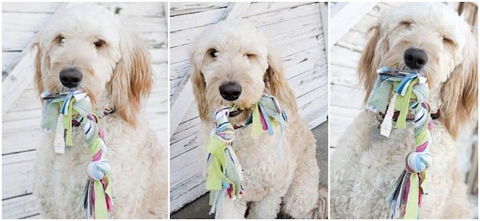 hund mit leine spielzeug, kauspielzeug aus bunten baumwollstoffen, bastelideen