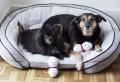 Hundespielzeug selber machen: 9 Schritt-für-Schritt Anleitungen und viele Ideen