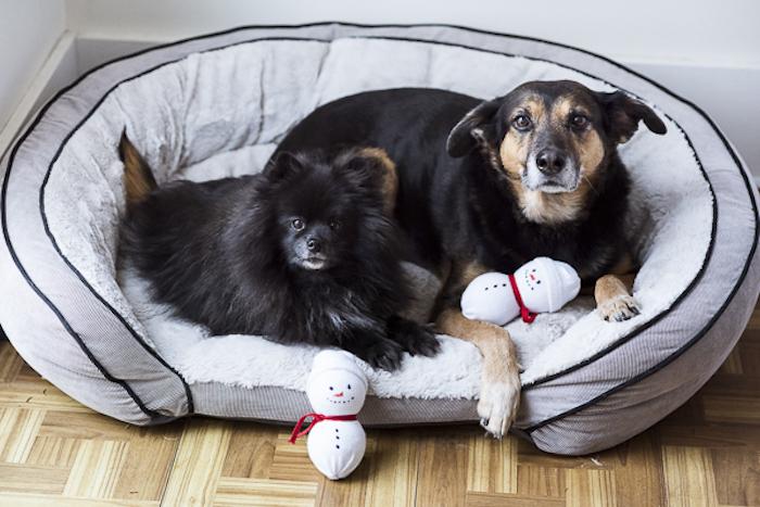 hundespielzeug selber machen, schneemänner aus socken und tennisbällen, schneemann basteln