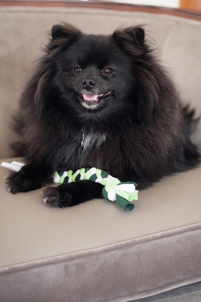 hundespielzeug selber machen, kleiner schwarzer hund mit spielzeug aus alten t-shirts