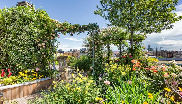 viele Kletterblume und andere bunte Blume, ein Pfad mit Dielen, Terrasse bepflanzen