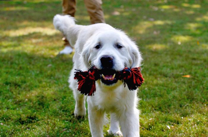 spielzeug hund, labrador mit kauspielzeug aus baumwollstoff in rot und schwarz