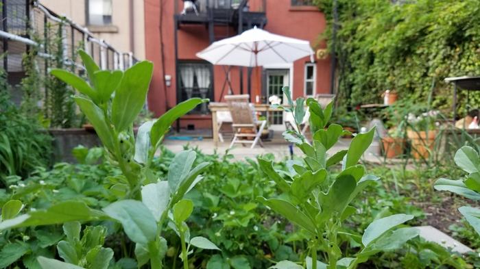im Vordergrund sind die grüne Pflanze für Terrasse, im Hintergrund ein weißer Sonnenschirm