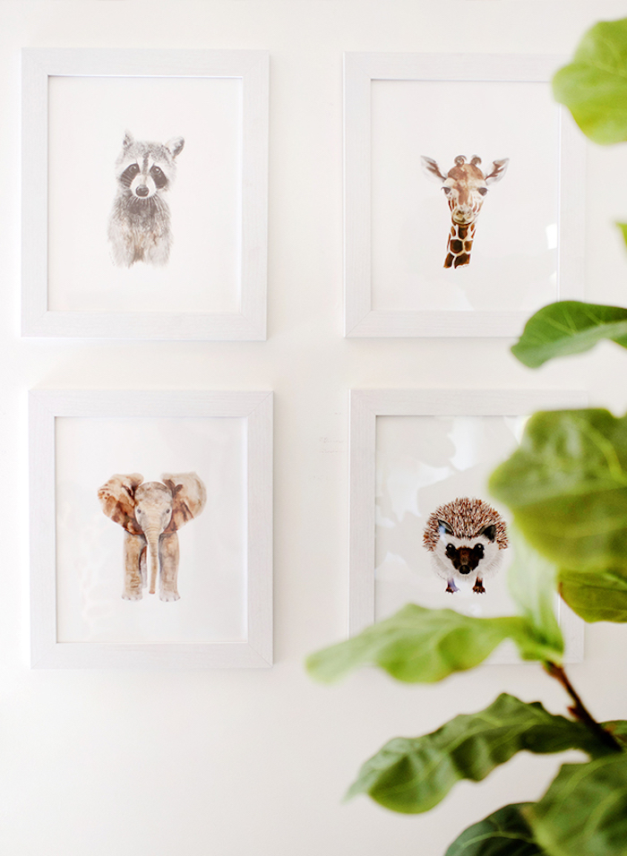 Bilder an der Wand, weiße Rahmen, Waschbär Giraffe Elefant und Igel, grüne Pflanze