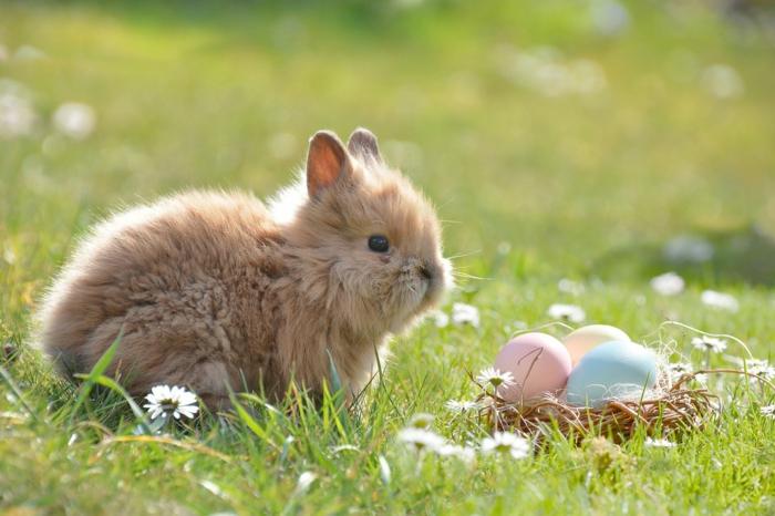 ein süßes Kaninchen spielt der Osterhase, der Eier auf der Wiese versteckt haben, Ostereier natürlich färben
