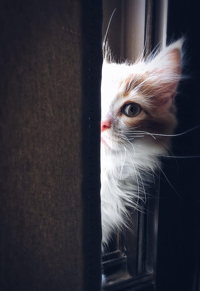 eine weiße katze mit grünen augen, weißen schnurrhaaren, einer pinken nase, süße katzenbilder mit sprüchen