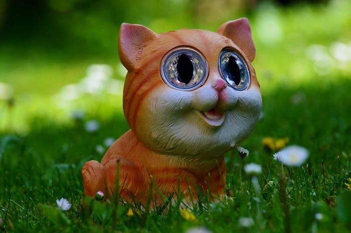 kleine orange katze mit blauen großen augen, einer kleinen pinken nase und pinken ohren, ein garten mit vielen kleinen weißen und gelben blumen und grass, schöne katzenbilder kostenlos