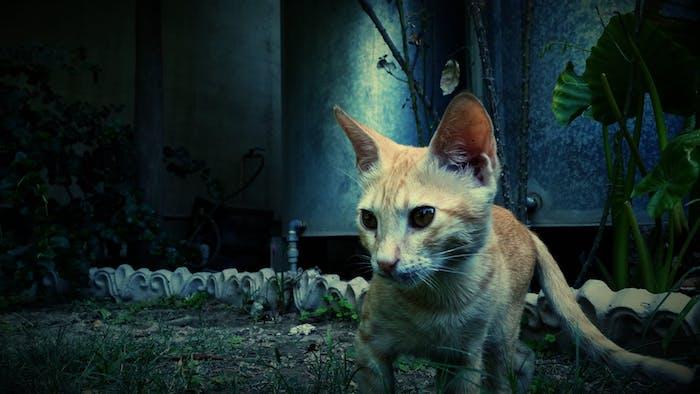 eine gelbe katze mit schwarzen augen, weißen langen schnurrhaaren und einer kleinen pinken nase, schöne katzenbilder, ein garten mit grünen pflanzen mit grünen blättern