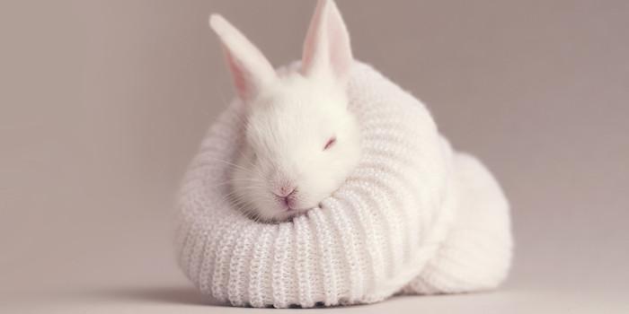 schöne osterbilder, ein kleiner weißer schlafender hase mit einem pinken kleinen nase und pinken hasenohren, osterbilder kostenlos herunterladen