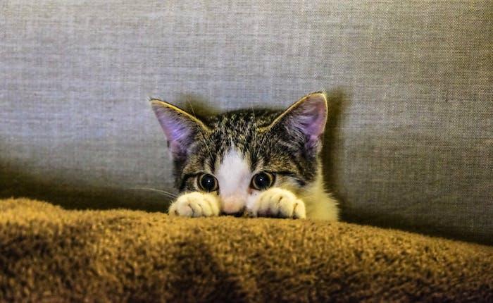 eine erschrockene kleine katze mit kangen weißen schnurrhaaren, großen schwarzen augen, lustige katzenbilder mit sprüchen, eine katze und ein graues kissen