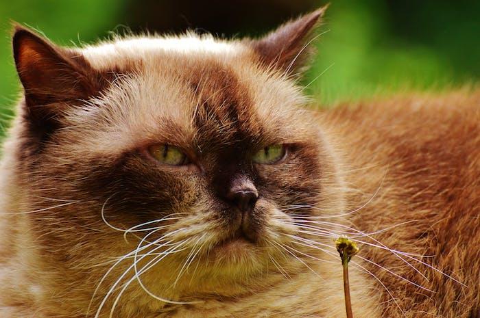 eine beige katze mit zwei grünen augen, langen weißen schnurrhaaren, einer schwarzen nase, witige katzenbilder kostenlos, eine kleine gelbe blume und viele grüne pflanzen