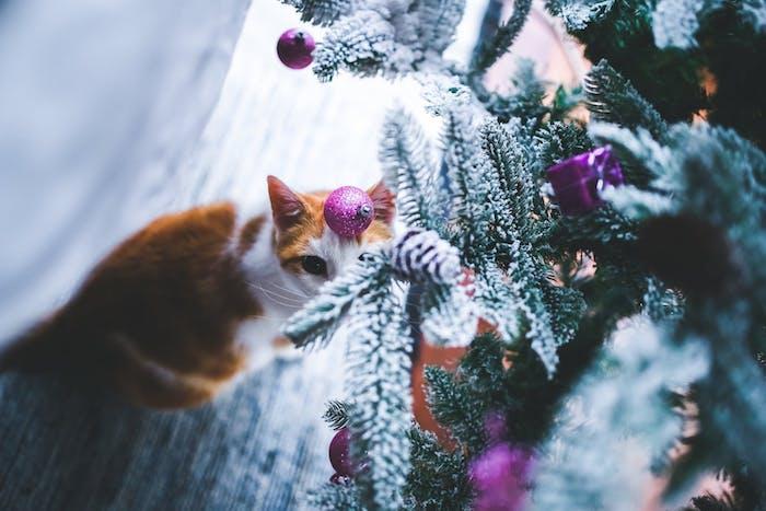eine orange kleine katze mit langen weißen schnurrhaaren und schwarzen augen und ein tannenbaum mit schnee und einem violetten weihnachtsschmuck