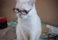 Einzigartige lustige Katzenbilder und Katzensprüche