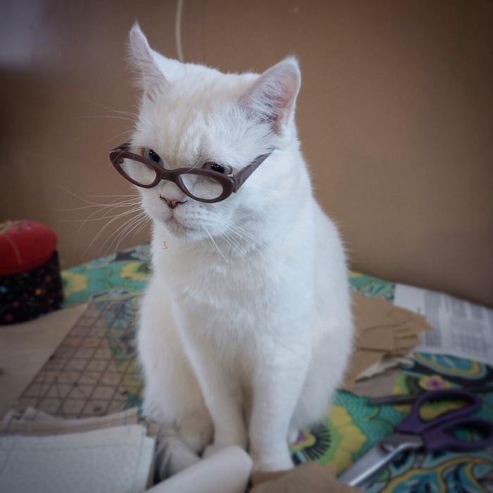 braune brille un eine große weiße katze mit blauen augen und mit langen weißen schnurrhaaren und pinken ohren, sehr lustige katzenbilder kostenlos herunterladen, ein tisch und eine violette schere