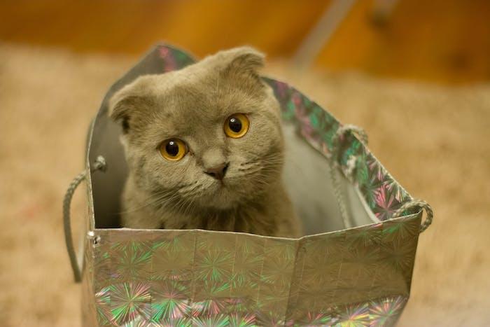 eine kleine graue katze mit gelben augen und langen weißen schnurrhaaren, witzige katzenbilder, eine graue tüte mit einer katze