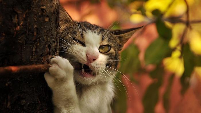 ein baum mit vielen grünen blättern und braunen ästen, eine schreckliche katze mit einer kleinen pinken nase, weißen zähnen und langen weißen schnurrhaaren und grünen augen, lustige katzenbilder
