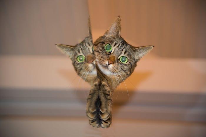 wand aus holz, lustige katzenbilder kostenlos herunterladen, eine graue katze mit langen weißen schnurrhaaren und zwei grünen großen augen