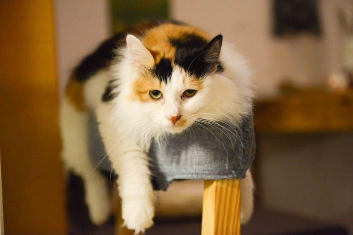 eine katze mit grünen augen, einer pinken nase und langen weißen schnurrhaaren, katzenbilder kostenlos, eine weiße katze mit gelben und schwarzen flecken