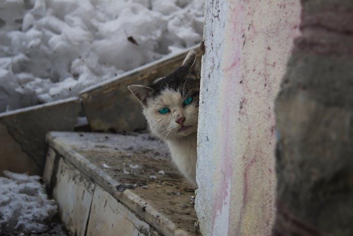 eine treppe aus holz, eine schreckliche weiße katze mit zwei blauen augen und einer kleinen pinken nase und mit weißen schnurrhaaren, katzenbilder lustig
