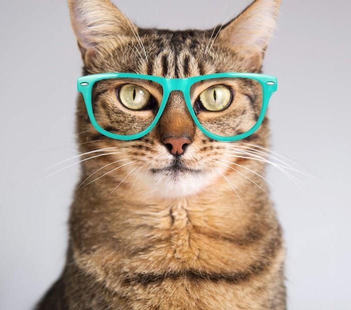 eine katze mit großen grünen augen, einer pinken nase und mit langen weißen schnurrhaaren, große grüne brille, witziges katzenbild kostenlos herunterladen