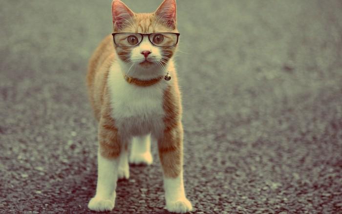 eine orange katze mit pinken ohren und einer pinken nase und langen weißen schnurrhaaren und gelben augen und schwarze brille, lustige katzenbilder mit text kostenlos herunterladen