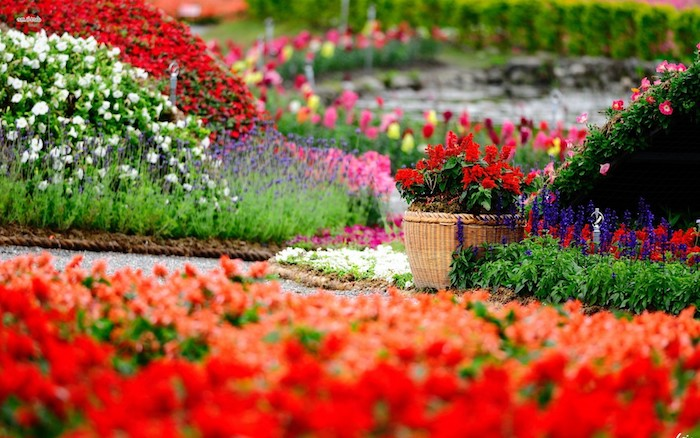 garten ideen, blumentopf mit kleinen roten blumen, wiesen mit vielen bunten gartenpflanzen