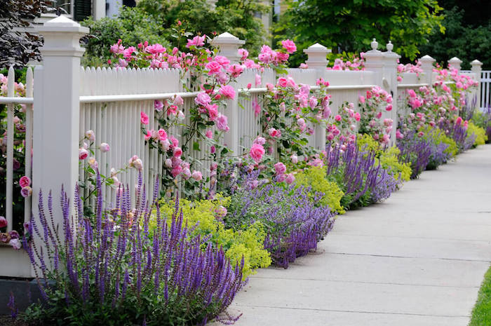 garten ideen, weißer gartenzaun aus holz, büsche mit rosa rosen, lavendel, gartenpflanzen
