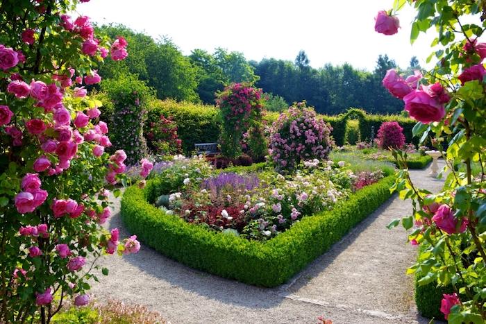 deko ideen garten, büsche mit rosa rosen, gartenzaun aus büschen, bunte blumen