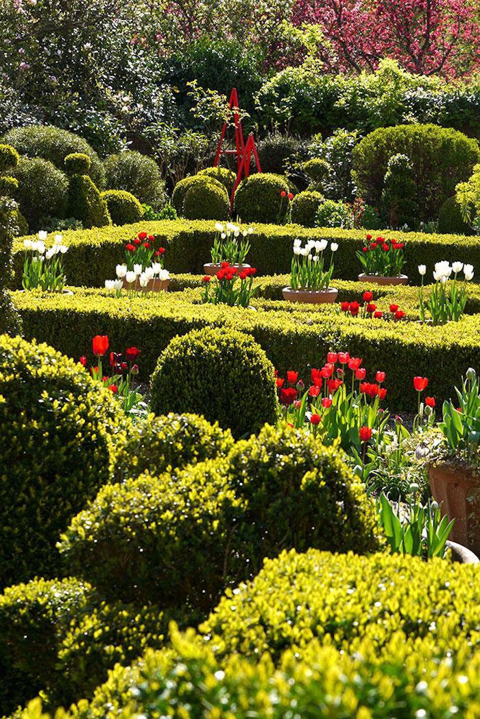 deko ideen garten, rote und weiße tulpen, labyrinth aus büschen, gartenpflanzen