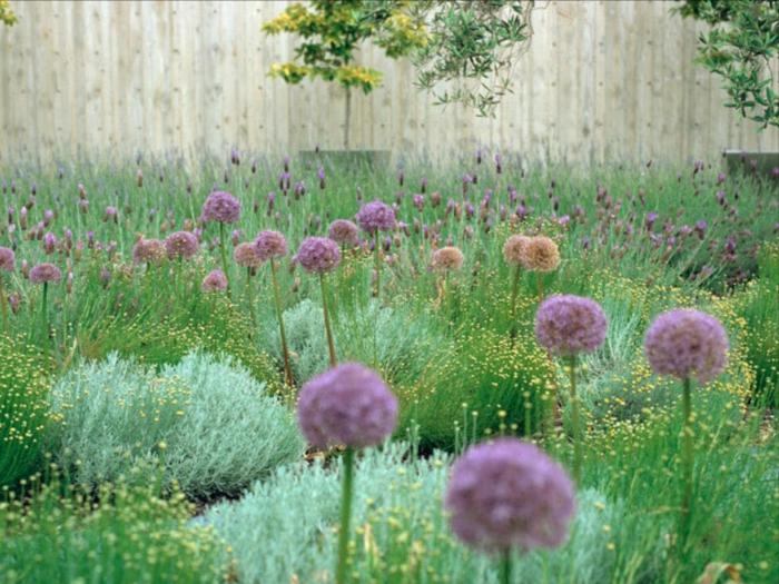 lila Blumen, Gartenideen für wenig Geld, frischer Gras, Sichtschutz aus Holz