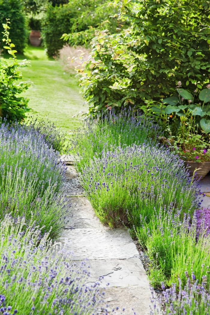 Lavender, Gartenweg aus Steinen, Rasen in Hintergrund, günstige Gartengestaltung Ideen