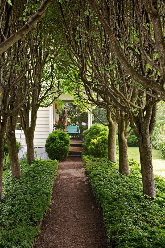 Schmaler Gartenweg zwischen hohen Bäumen, kleine Ziersträuche, Garten Ideen günstig