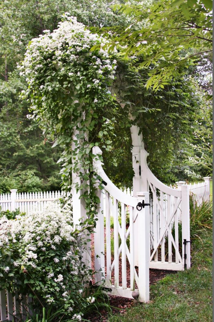 Garten anlegen günstig, niedriger weißer Zaun mit geöffnete Pforte, weiße Kletterblumen