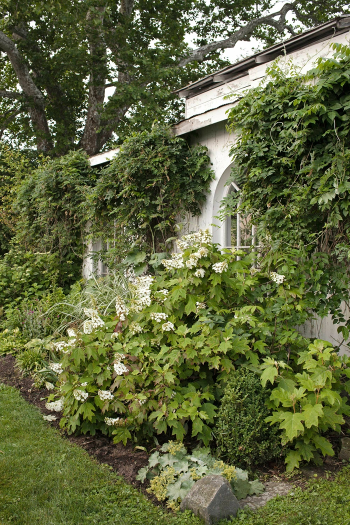 ein Rasen, Kletterpflanzen, ein großer Baum, Garten anlegen günstig, herrlicher Garten
