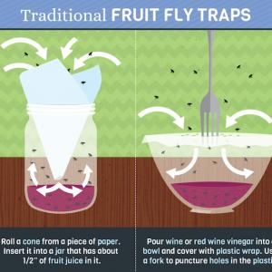 Fruchtfliegenfalle selber machen - so können Sie die Fruchtfliegenplage bekämpfen