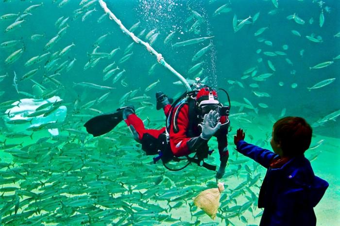 ein Junge, ein Taucher und viele Fische an der dänischen Nordseeküste