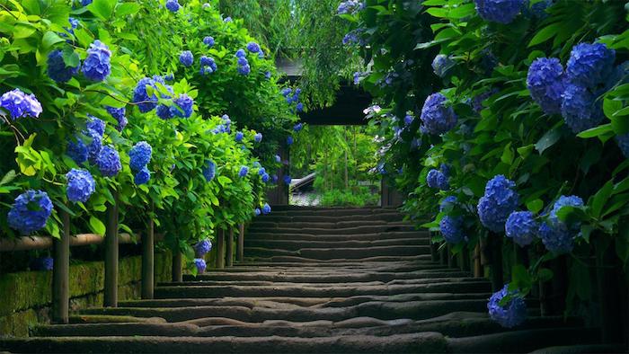 gartengestaltung beispiele, tunnel mit blauen hortensien, pfad, gartenpflanzen, natur