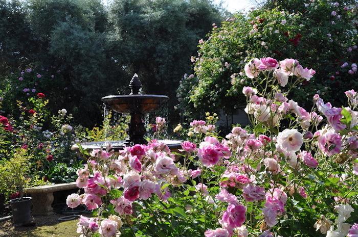 kleingarten gestalten, fontäne mit wasser, büsche mit rosa rosen, natur, park