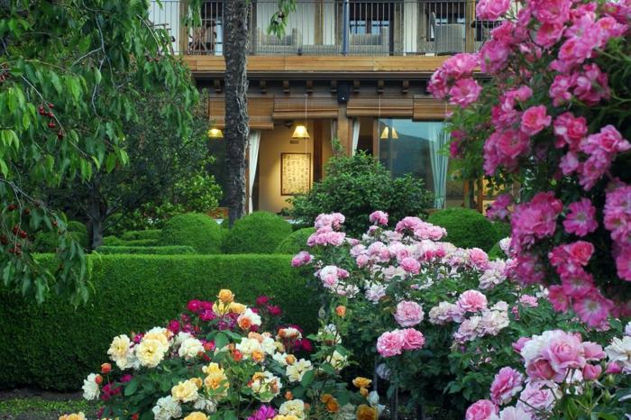 Blumen in rosa und gelber Farbe, Hecke in verschiedenen Formen, Garten verschönern