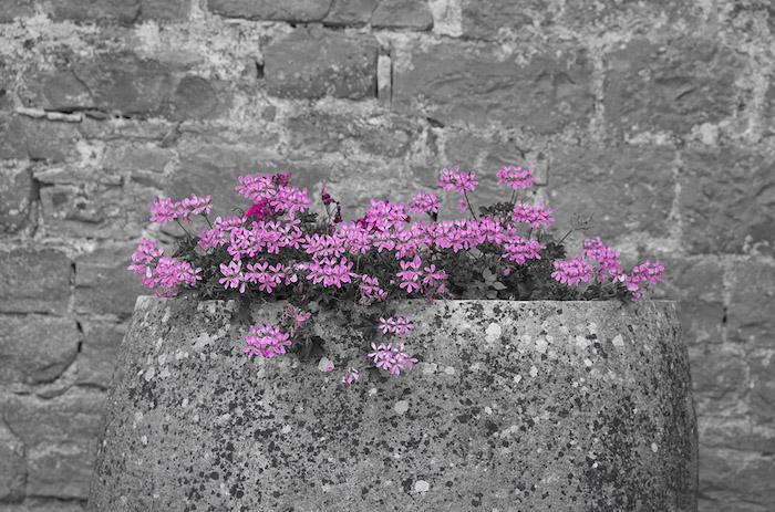 eine einfache idee, wandfarbe grau aus stein, landhaus idee, grauer topf aus stein mit bunten rosaroten blumen