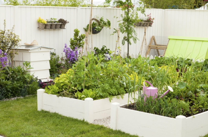 ein selbstversorger Garten mit viel Gemüse, rosa Gießkanne, weißer Sichtschutz mit Blumentopf als Dekoration