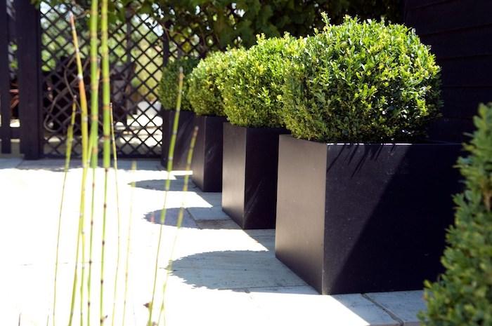 Eckige Schwarze Pflantgefäße, Garten Dekorieren, Moderne Gartengestaltung,  Immergrüne Gartenpflanzen