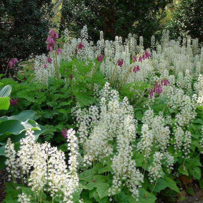 ein garten mit vielen kleinen weißen und violetten bodendecker pflanzen mit grünen blättern und mit grünen stielen, bodendecker immergrün, garten gestalten ideen