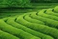 Der Landschaftsgarten – moderne Tendenzen bei der Gärtnerei