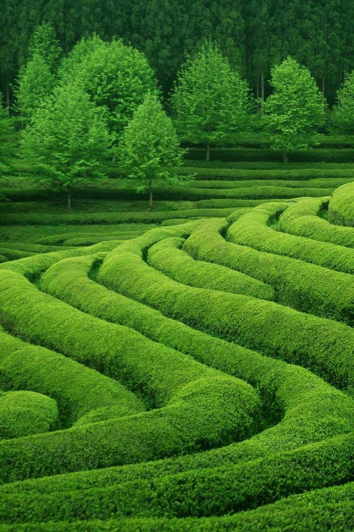privater landschaftsgarten zu hause selber gestalten, hier eine idee in grün, felder, bäume, büsche, die grüne farbe wirkt beruhigend